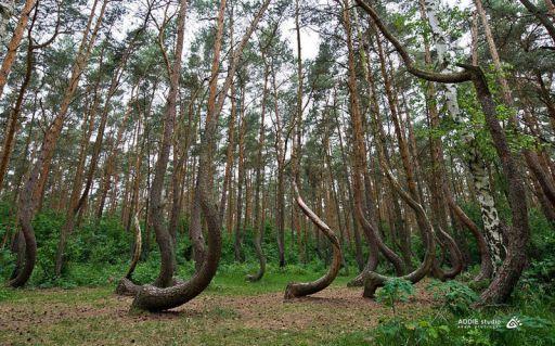 Arboles curvos