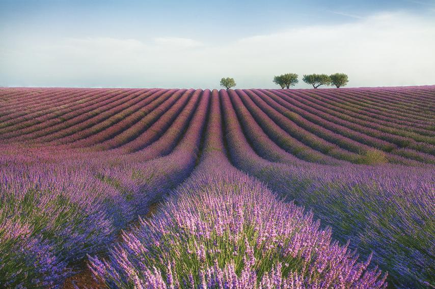 Velours-de-lavender-by-Meg-C.
