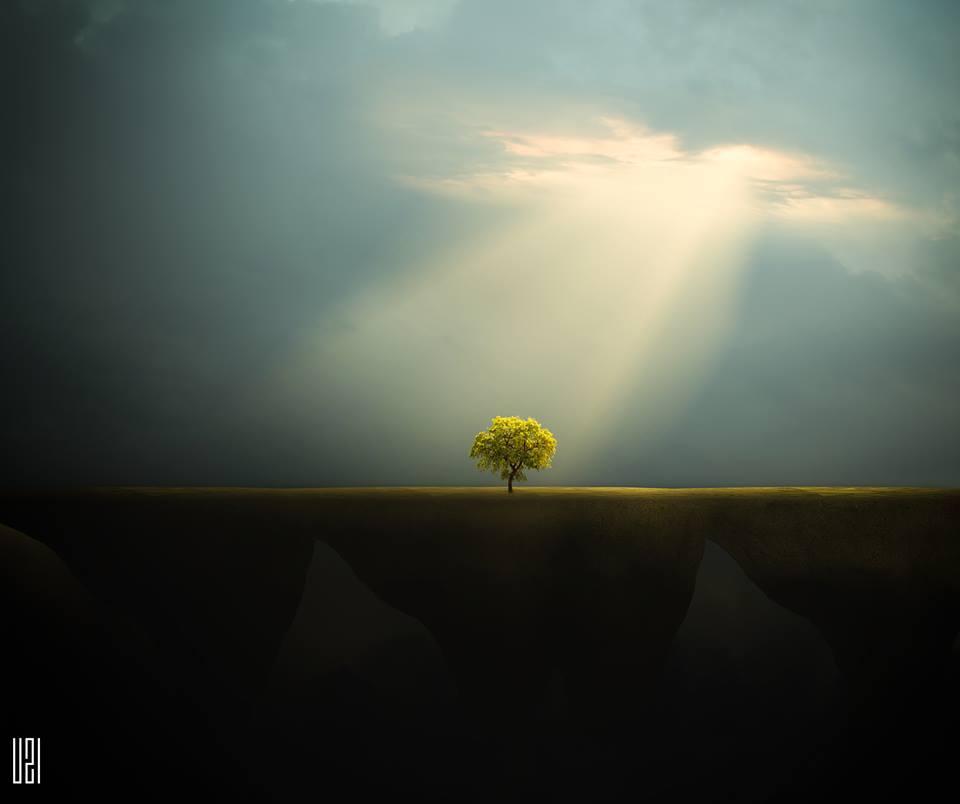 arbol luz