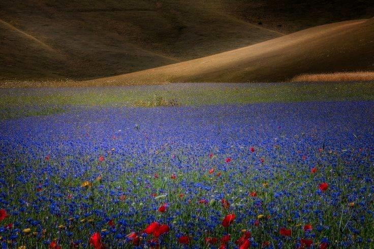 desierto-florido