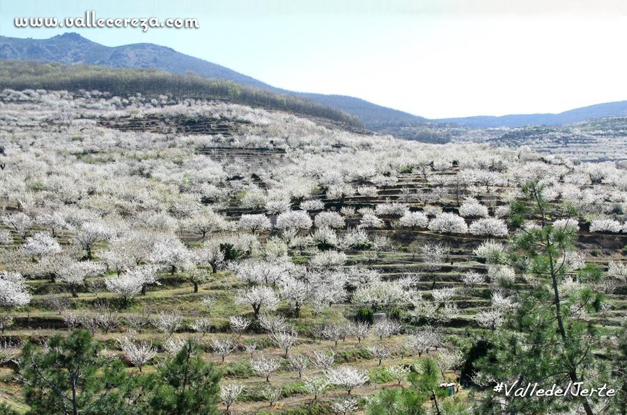 valle-del-jerte-valle-cereza-326